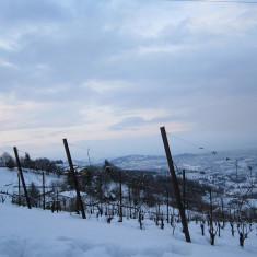 polisena vineyard