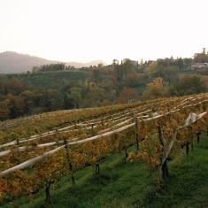 Sotto chiesa vineyards