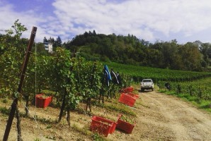 andar-per-vigne-2016